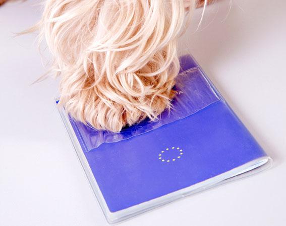 paszport-dla-psa-chipowanie